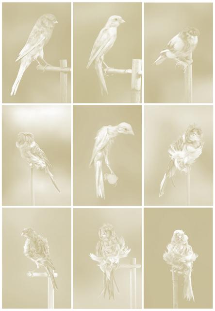 Carsten Höller, 'Canaries', 2009, Carolina Nitsch Contemporary Art