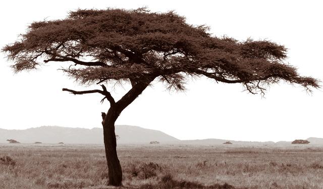 , 'Serengeti Tree #7,' 2014, Cross Mackenzie Gallery