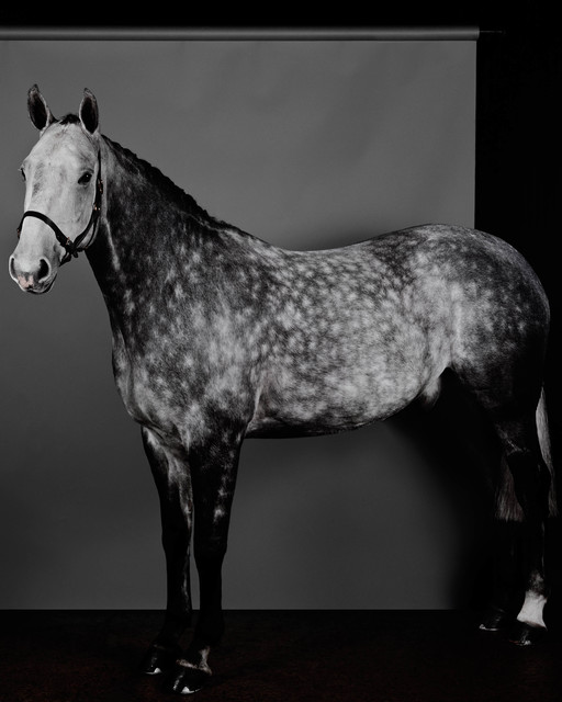 , 'Horse (Profile) (Dapple Grey) (I),' 2017, Anton Kern Gallery