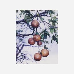 Orange Grove #4