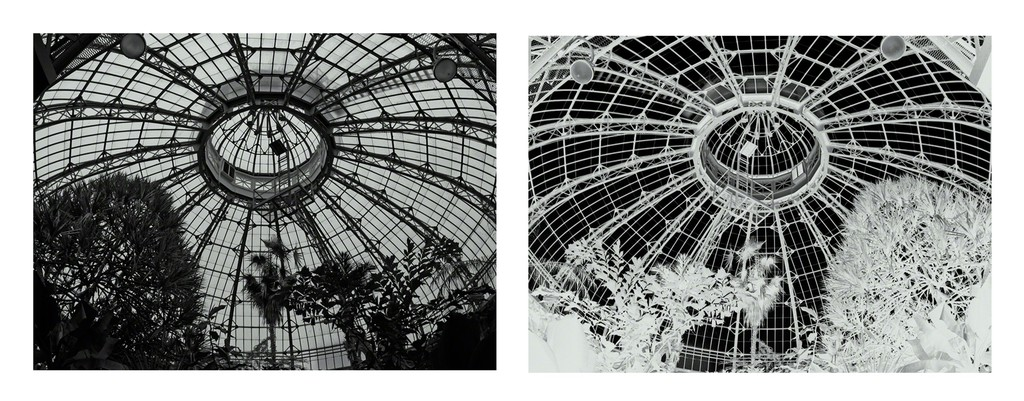 Terminus 1 and 2, interior of palm house at Allan Gardens,Toronto