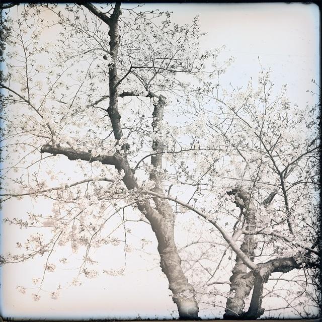 , ' Sakura Koganecho,' 2019, Purdy Hicks Gallery