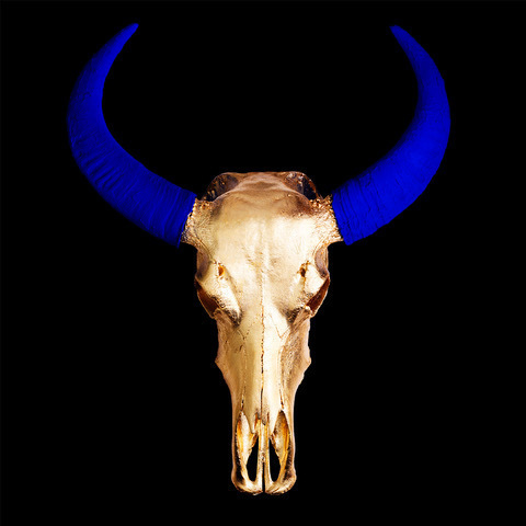 , 'Chinese Water Buffalo Skull – Gold Skull with Blue Horns on Black - Small,' 2018, M1 Fine Art