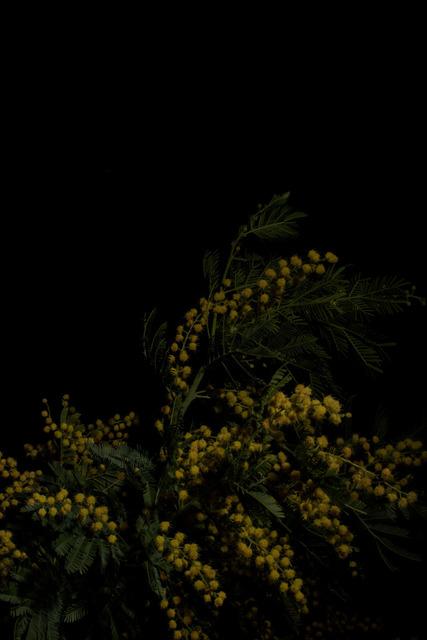 , 'Plantarium n. 13,' 2019, ILEX Gallery