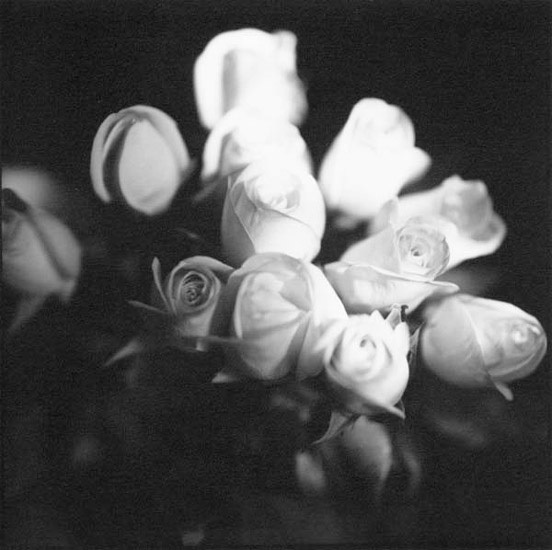 Bruce Cratsley, '12 Roses', 1994, Photography, Silver print unmounted, Contemporary Works/Vintage Works