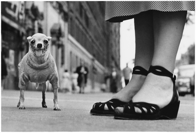 , '1. New York City. (Chihuahua),' 1946, f22 foto space