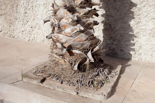 Catarina Botelho, 'à sombra do sol', 2015, Galería silvestre
