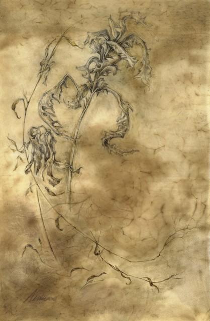 , 'Winter Fern,' , Jonathan Cooper