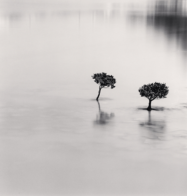 Michael Kenna, 'Two Mangrove Plants, Lantau Island, Hong Kong', 2007, Robert Mann Gallery