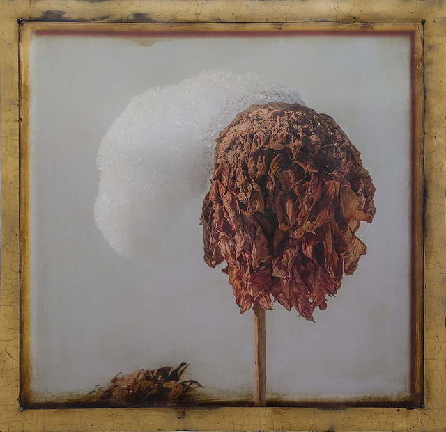 , 'Dahlia Icon Snowcap,' 2017, William Campbell Contemporary Art, Inc.