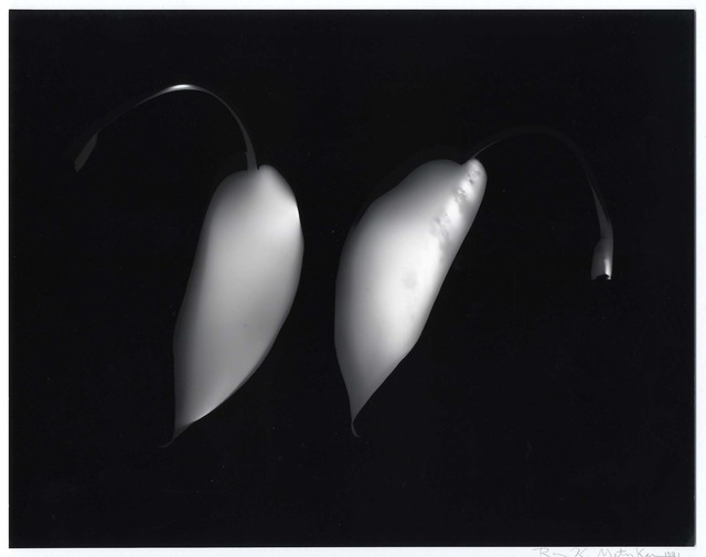 , 'Untitled Photogram,' 1991, Laurence Miller Gallery