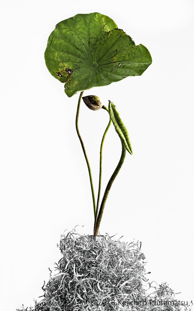 , 'Lotus 14,' 2018, Galerie Marie-Robin
