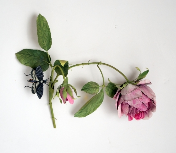 Carmen Almon, 'Hanging Cabbage Rose with Sphinx Moth', 2019, Octavia Art Gallery