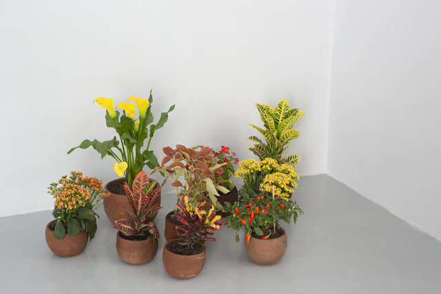 Spencer Finch, 'A Natural History of Colors (after Wittgenstein)', 2019, Other, 27 Plants in Mexican soil, terracotta pots, Galerie Nordenhake