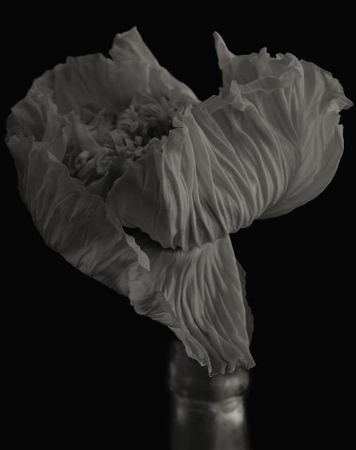Yumiko Izu, 'Secret Garden Noir 21', 2004, Howard Greenberg Gallery
