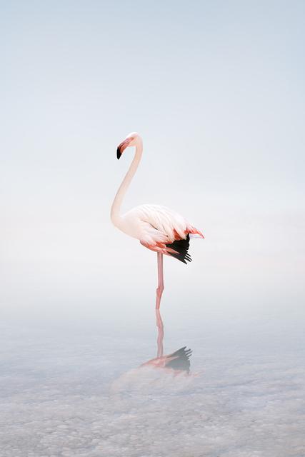 Alice Zilberberg, 'Wondering White Flamingo', 2020, Photography, Photo-based digital painting (Paper - Canson Infinity Rag Photographique), Isabella Garrucho Fine Art