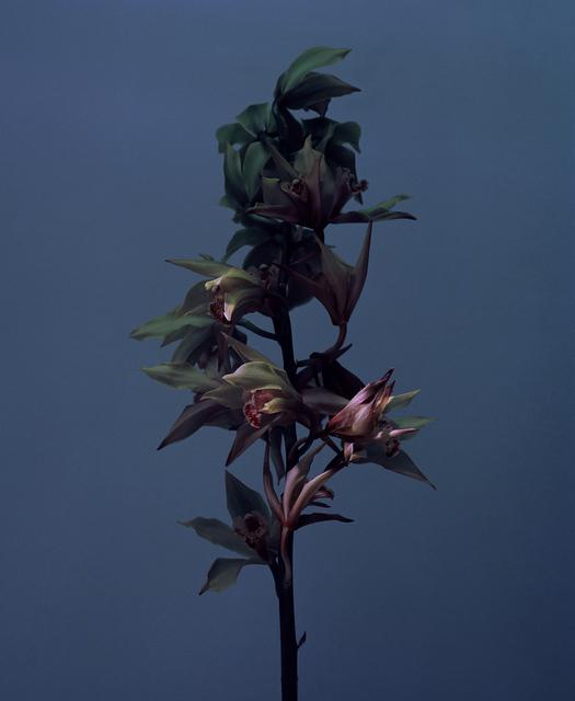 , 'fig. VII,' 2017, Galerie SOON