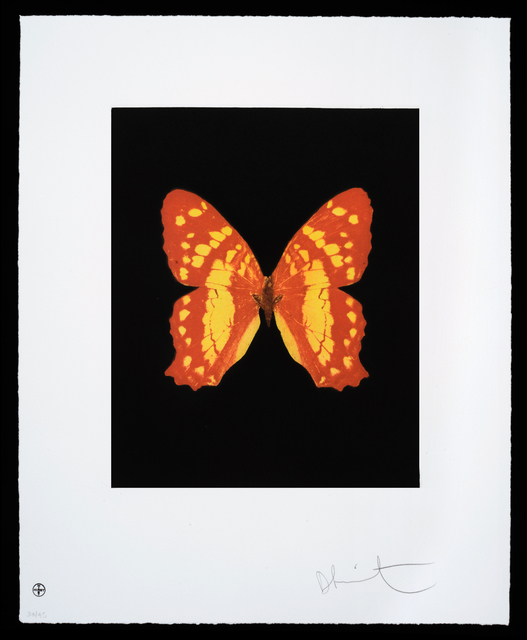 , 'Butterfly – Portrait – Emerge,' 2012, Cassia Bomeny Galeria