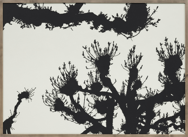 Stefan Thiel, 'Kastanien', 2007, Mai 36 Galerie