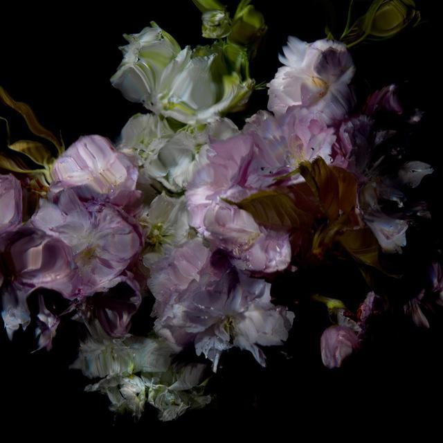 , 'Floral Study [0503],' 2012, Dellasposa