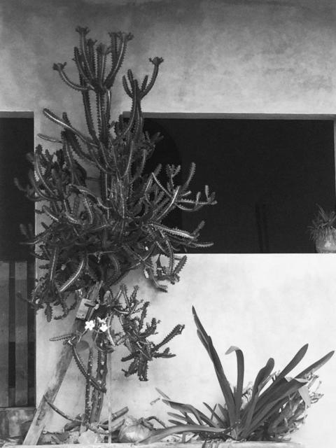Heidi Jung, 'Mexico #3', 2017, Michael Warren Contemporary