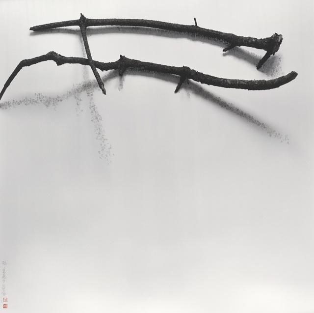 , '樹語 - 鬆 - 果殼中的宇宙,' 2010-2017, Ipreciation