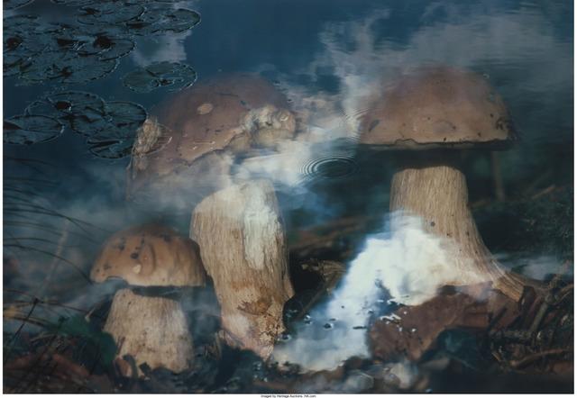 David Weiss, 'Pilze in Wasser', 1998, Heritage Auctions