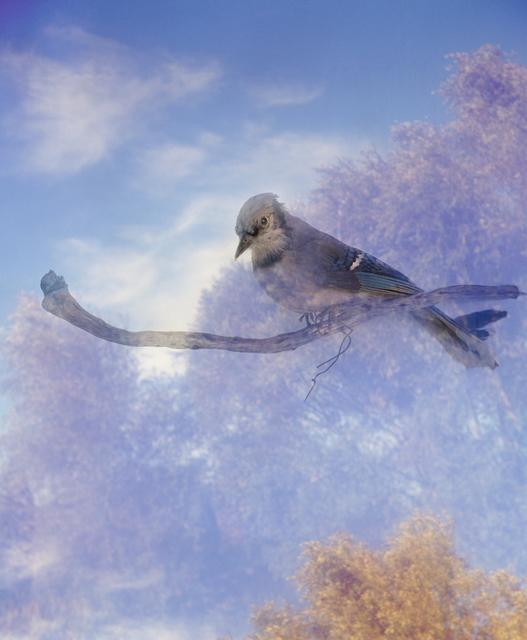 , 'Birds fragile like glass, Blue Jay,' 2018, Barnard