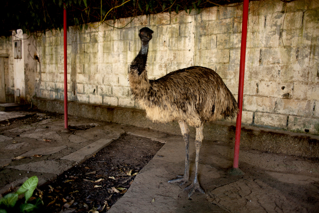 , 'Emu (from the series Zoo),' 2014, Zipper Galeria