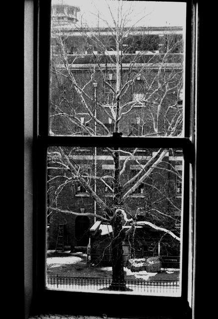 Pete Marifoglou Tree, 1968 auf Hahnemühle Museum Etching Deckle Edge 20 x 28cm