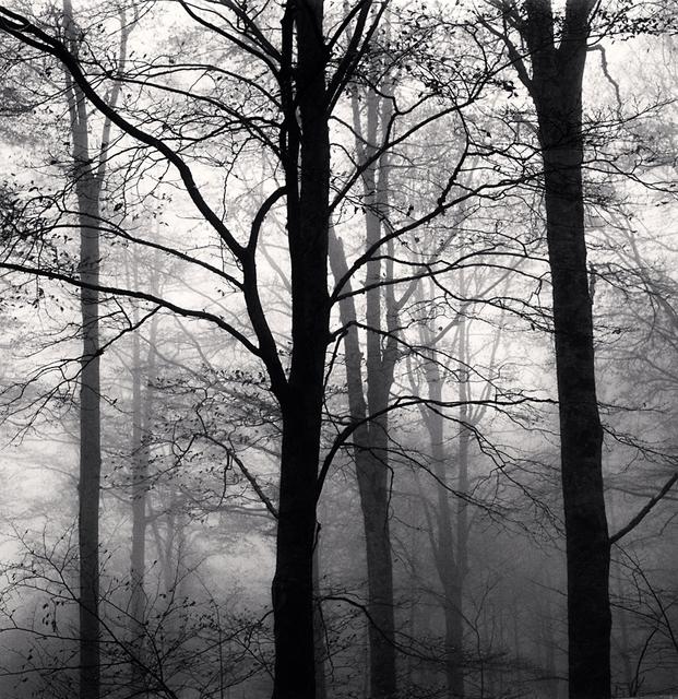 , 'Forest Mist, Study 1, Rigopiano, Abruzzo, Italy,' 2015, G. Gibson Gallery