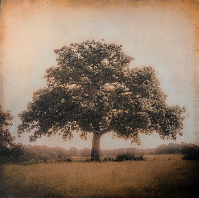 , 'Live Oak, Spring, Plum Creek, Texas,' , Etherton Gallery