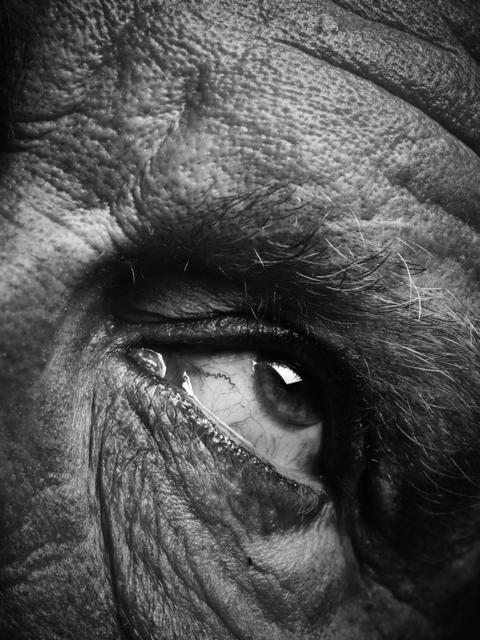 Sandro Miller, 'Bill Brandt / Eyes D, 1960-1964 ', 2014, Fahey/Klein Gallery