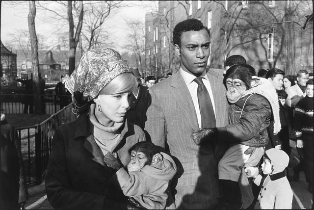 , 'Central Park Zoo, New York City,' 1967, Etherton