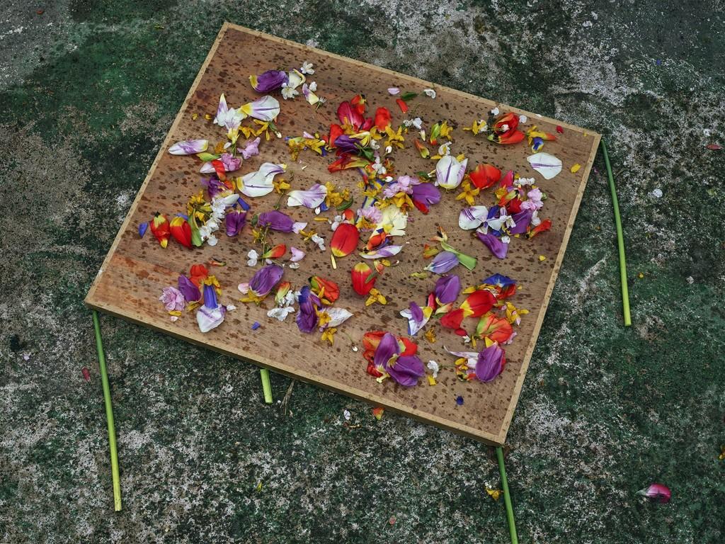 Abelardo Morell   Flowers for Lisa #18, in Monet\'s Gardens, Giverny ...