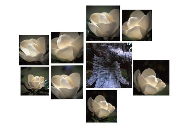 , 'Camélias e Elefante,' 2009, Silvia Cintra + Box 4