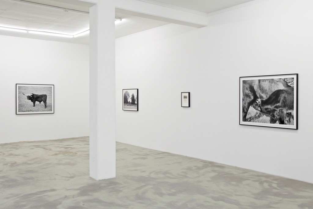 UR, 2015, exhibition view at KLEMM'S Berlin