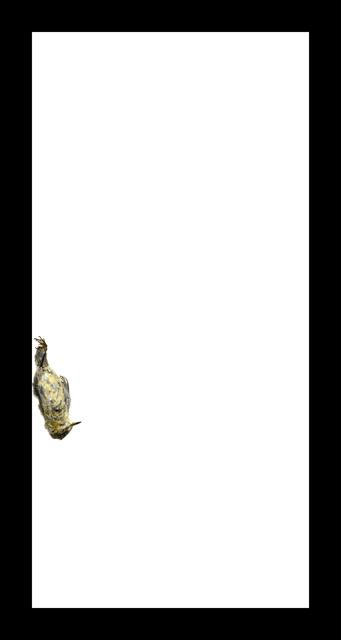 , 'Cape May Warbler,' 2017, Corkin Gallery