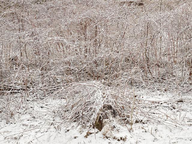 , 'Natural Order #1, Grey County, Ontario, Canada, Spring,' 2020, Nicholas Metivier Gallery