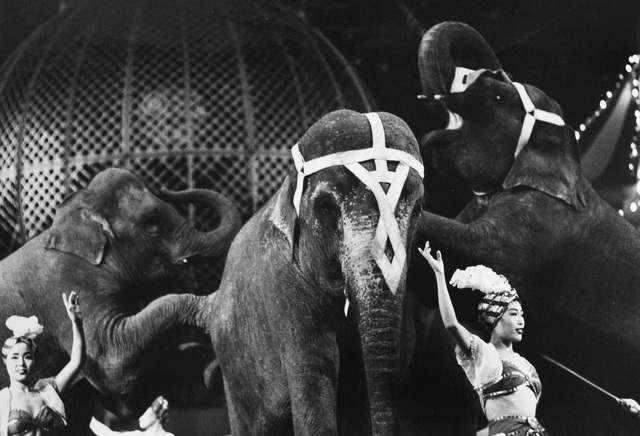 , 'Elephants from the series Circus,' 1956, 1957, vintage print, IBASHO