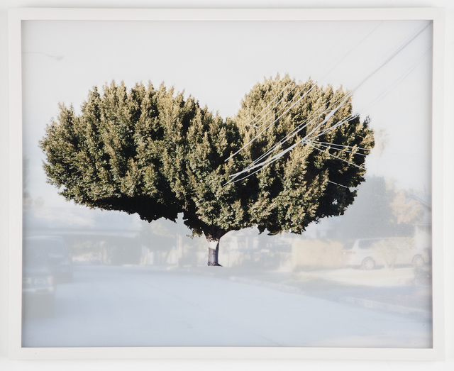 , 'ficus #3 [n. dillon st. at w. temple st.] ,' 2009, ROSEGALLERY