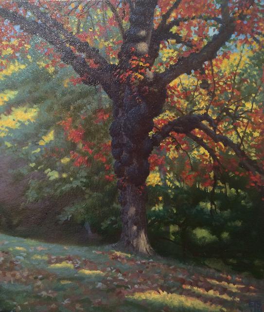 , 'Gnarled Tree, Sunny,' 2014, Gallery NAGA