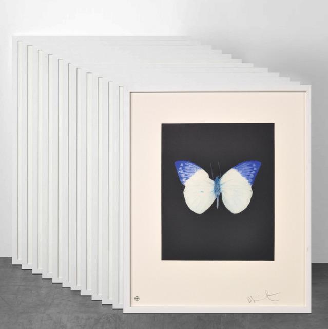Damien Hirst, 'Damien Hirst, Butterfly (Portfolio of 12)', 2009, Oliver Cole Gallery