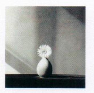 , 'African deisy,' 1982, Pepe Cobo