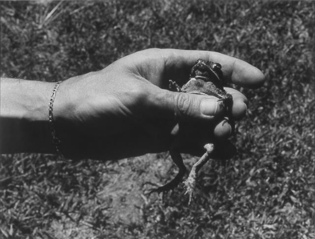 , 'Untitled (hand and toad),' 1988-1989, P.P.O.W