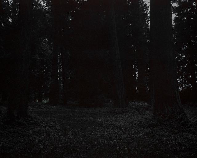 Chris Bennett, 'From the series Darkwood, #25', 2014, Circuit Gallery