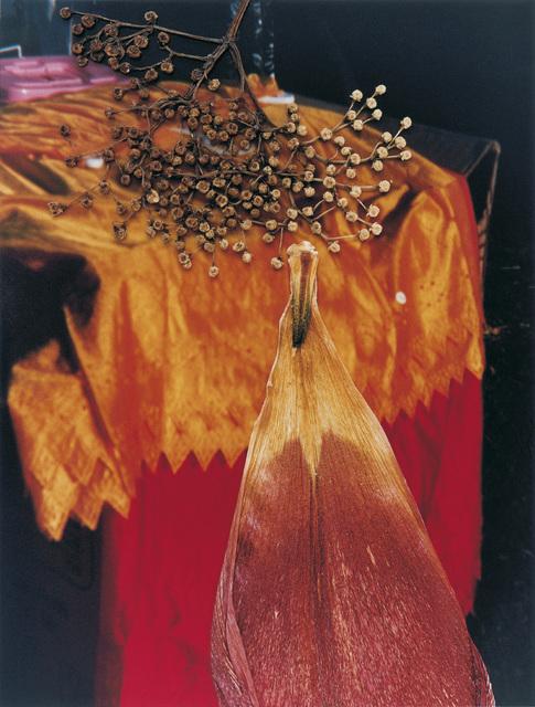 , 'Untitled, from the series 'Hackney Flowers',' 2005, CHRISTOPHE GUYE GALERIE