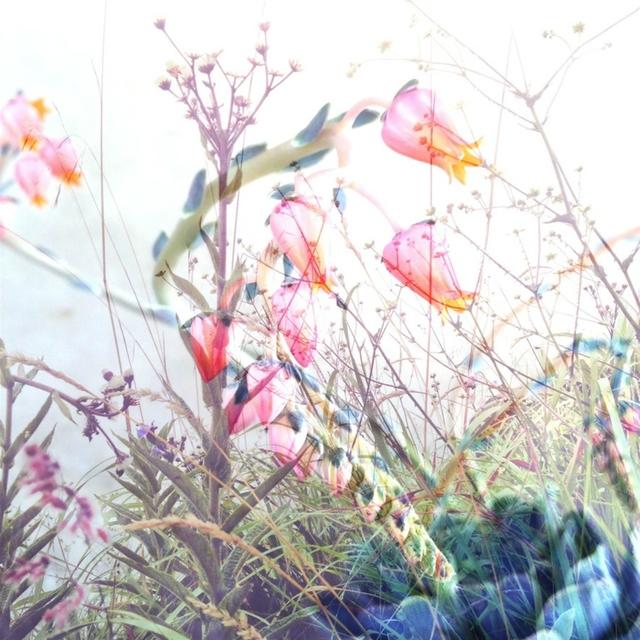 , 'botanical 3,' 2018, manZArt