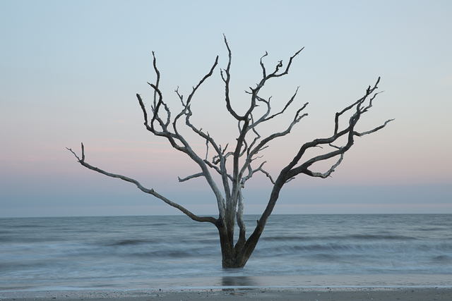 , 'Tree in the sea (#5),' 2014, Susan Eley Fine Art