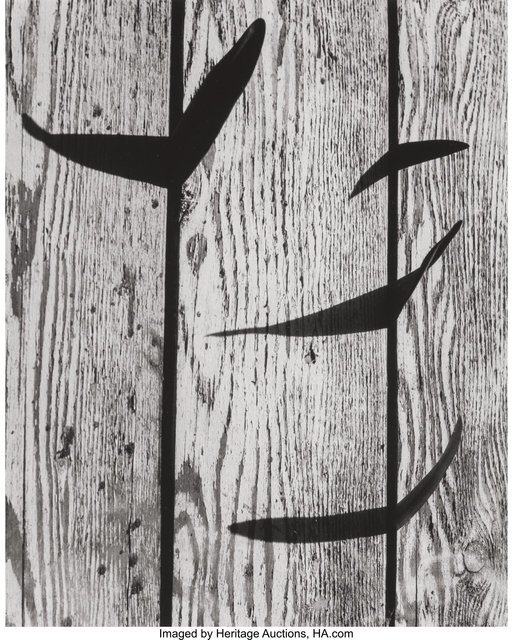 Ruth Bernhard, 'Flying Leaves', 1952, Heritage Auctions